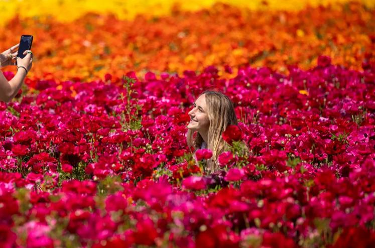 صورة تذكارية بين الزهور