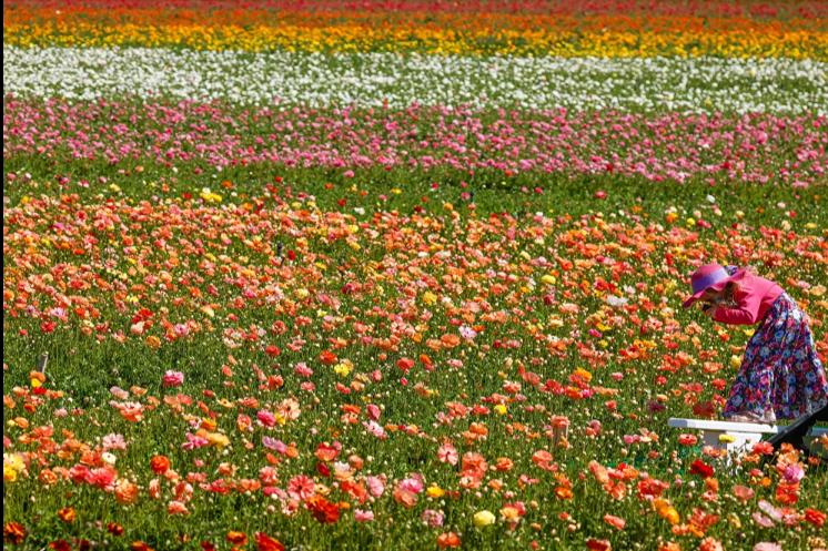 الزهور تتداخل وترسم لوحة فنية رائعه