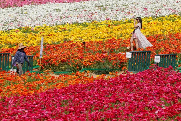 زهور الحديقة