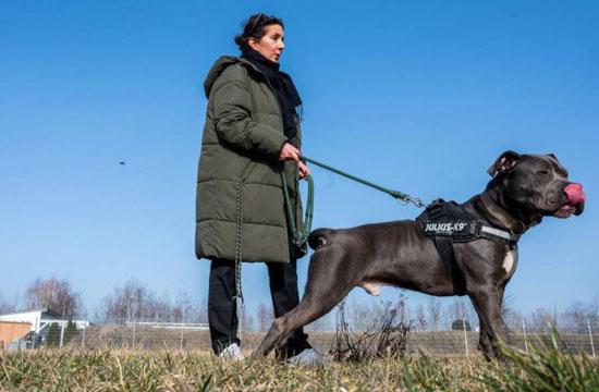 الكلاب فى كورونا (4)