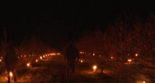 اشعال الشموع وسط المزارع