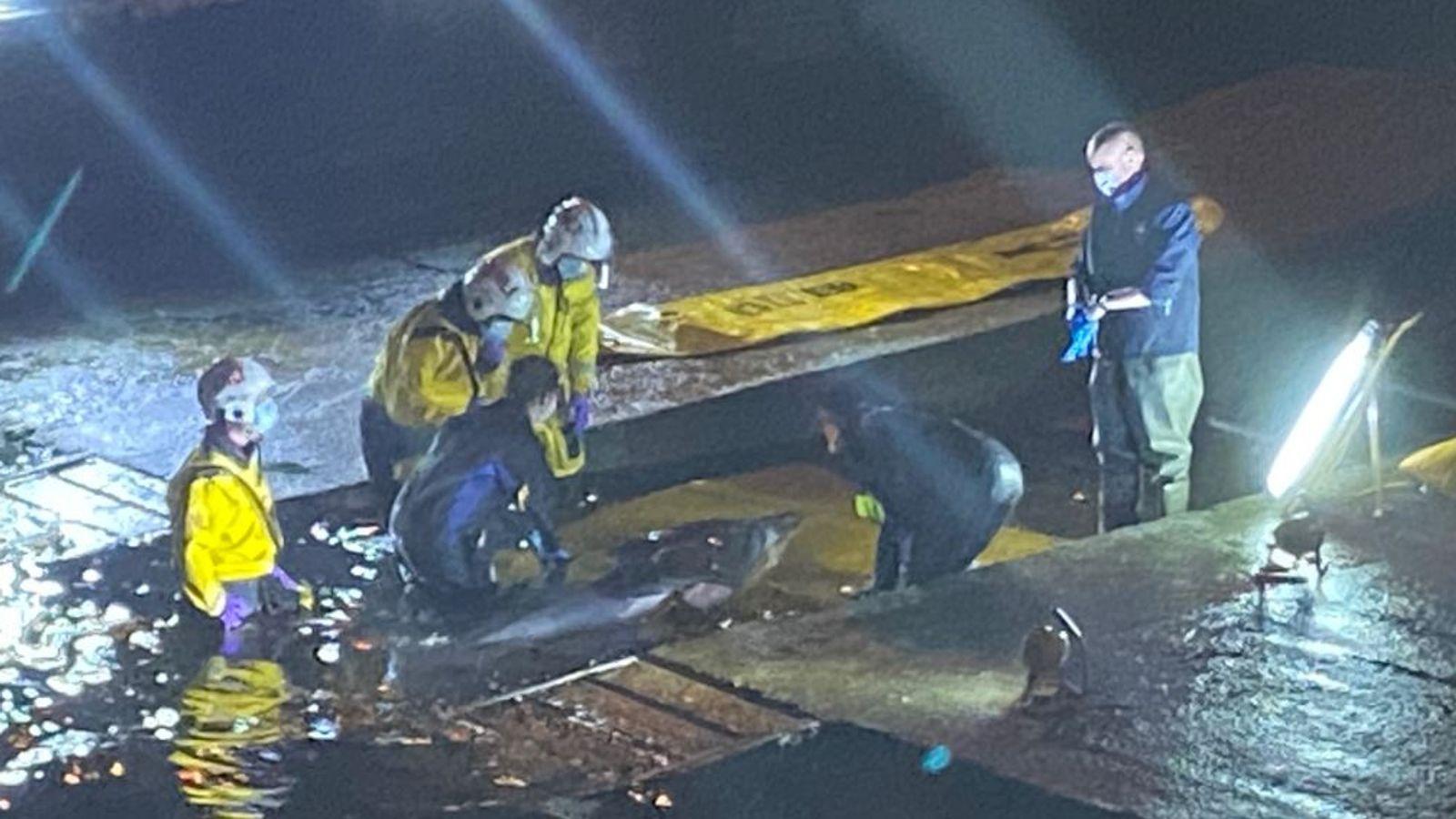 عملية انقاذ الحوت