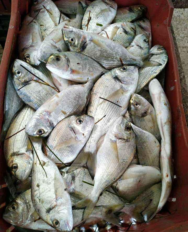 أسماك البحيرة