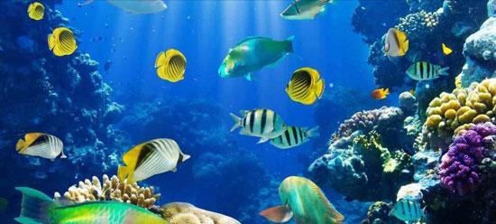 احواض-الاسماك-بمتحف-الاحياء-البحرية