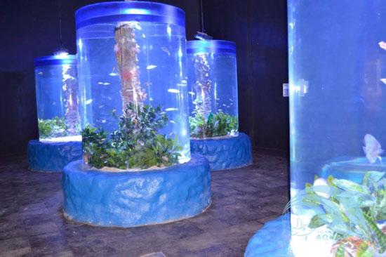 متحف-الاحياء-المائية-جراند-اكواريوم
