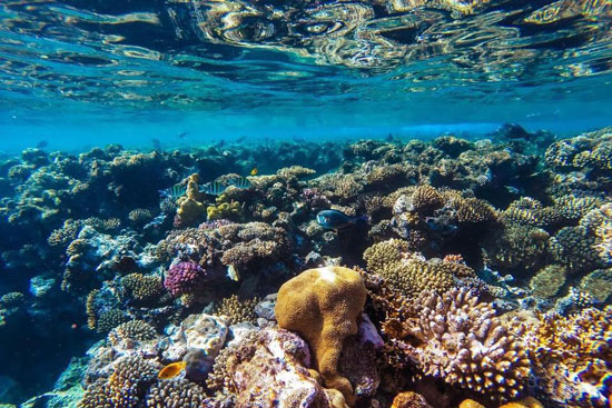 الشعاب-المرجانية-بالغردقة