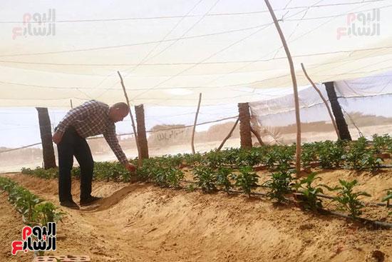 البيوت-الزراعية-المحمية-بالوادى-الجديد-فرص-عمل-مثالية-للشباب-(8)