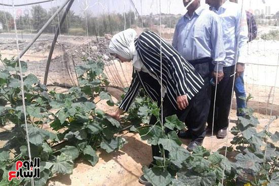 البيوت-الزراعية-المحمية-بالوادى-الجديد-فرص-عمل-مثالية-للشباب-(5)