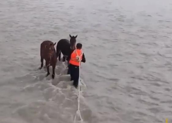 الشرطى يربط عنق الحصان