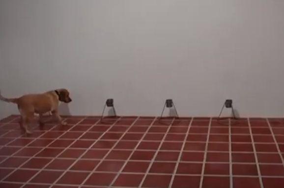 كلاب يرصد الرائحة