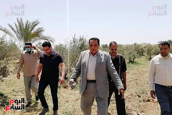 نجاح-زراعات-الزيتون-بالرى-بالتنقيط-فى-محافظة-دمياط-(2)