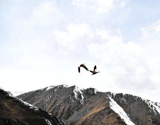 جبل سابو الثلجي (5)