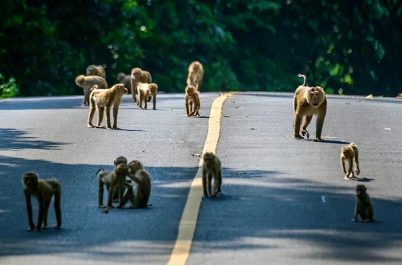 القرود