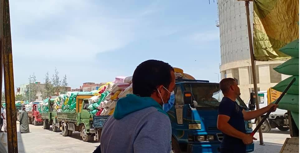 انتظام العمل في صوامع كفر الشيخ