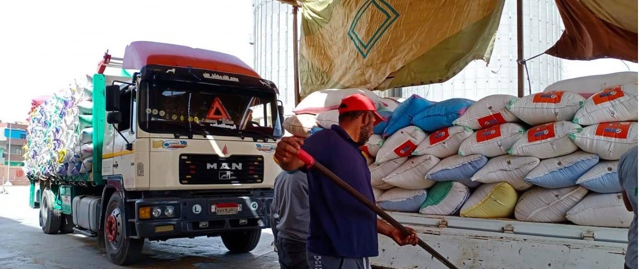 استلام القمح بصومعة كفر الشيخ
