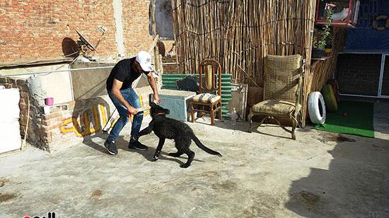 تدريب كلب على الشراسة