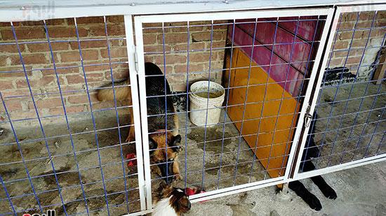 كلب شرس داخل المزرعة