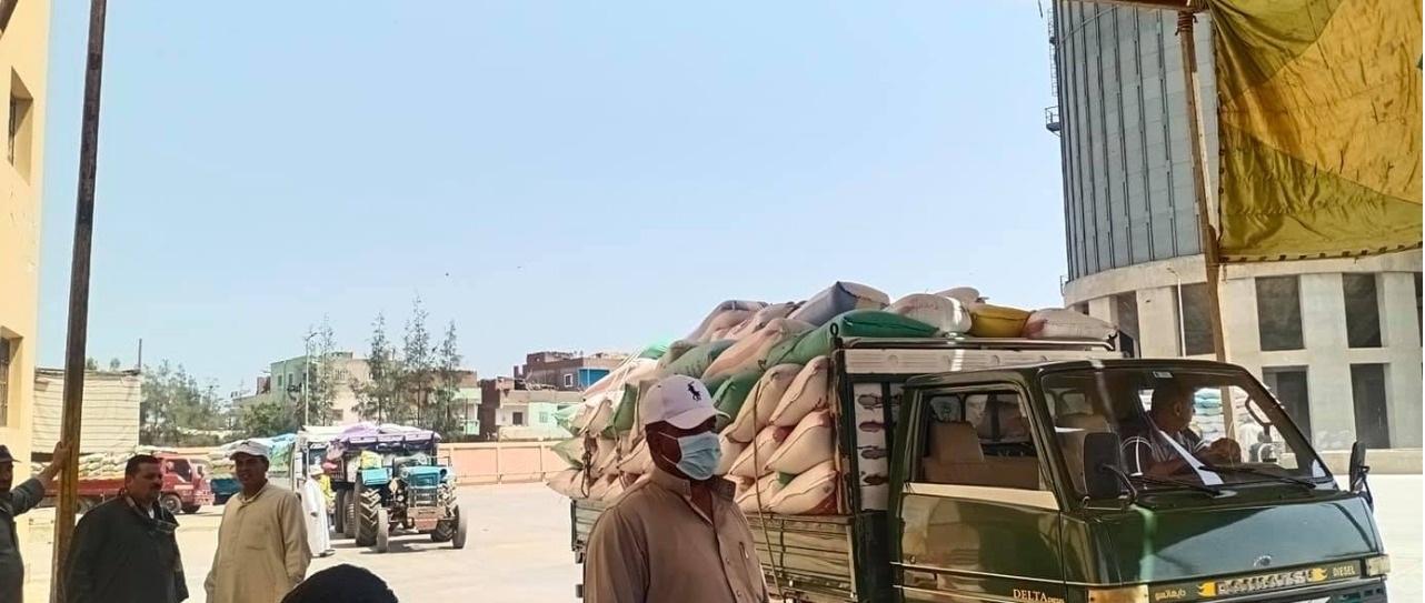 توريد القمح بالشون والصوامع بكفر الشيخ