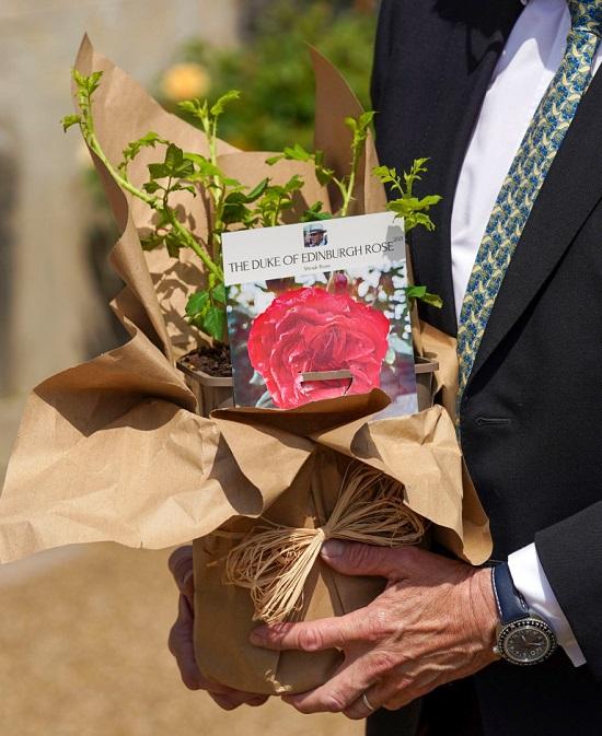 سميت الوردة المولودة حديثًا على اسم الدوق بعد وفاته في 9 أبريل