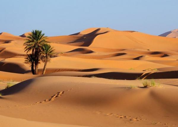 تفاصيل-اكتشاف-طنين-مخدرات-مخبأة-تحت-رمال-الصحراء-المغربية-واعتقال