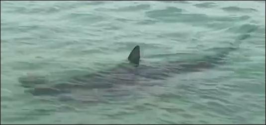 أسماك القرش (2)