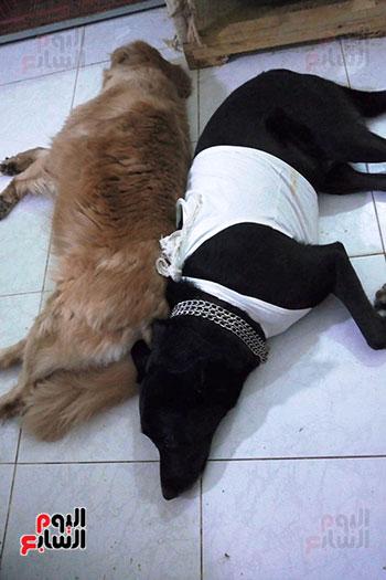رعاية-الكلاب-بشكل-مميز-داخل-منزل-الشقيقتين-البريطانيتين