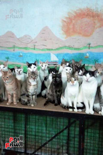 اعداد-كبير-من-القطط-فى-مكان-مجهز-لهم-بالمنزل