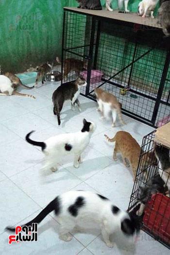 تجهيز-غرف-كاملة-بمنزل-تيريزا-وباربرا-لرعاية-القطط-والكلاب