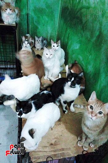 الشقيقتين-البريطانيتين-توفران-الدعم-لقطط-الشوارع