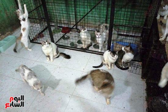 تيريزا-وباربرا-يوفران-كل-الرعاية-للقطط-بمنزلهما