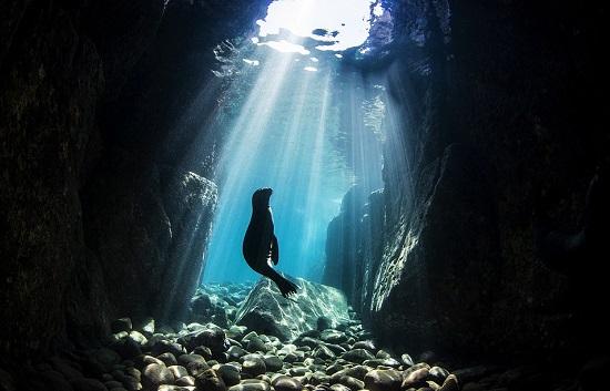 جرو أسد البحر في كهف بالمكسيك