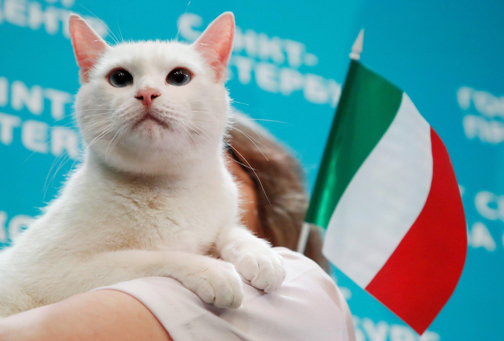 القط اخيل (3)