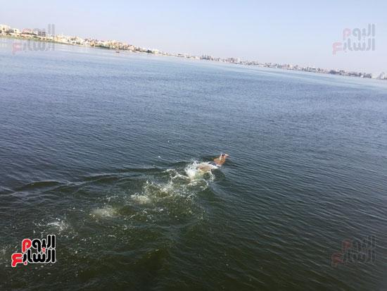 السباح-العالمى-سيد-الباروكى-يعبر-قناة-السويس--(3)