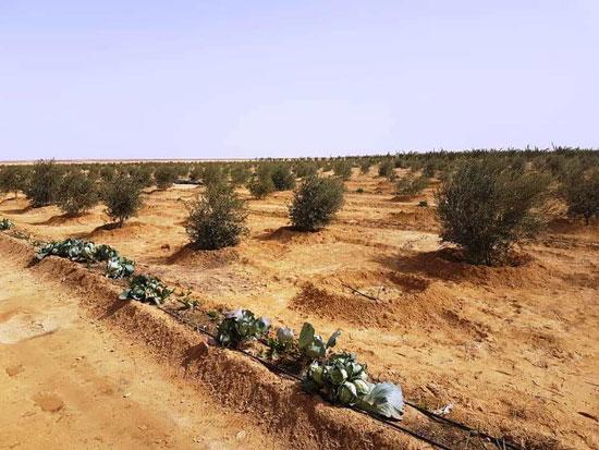مناطق زراعية بوسط سيناء