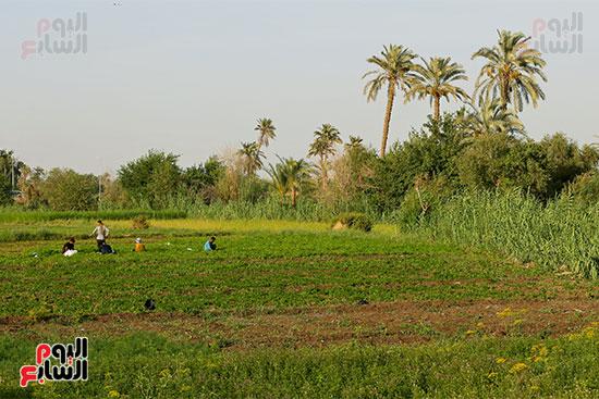 الارض الزراعيه