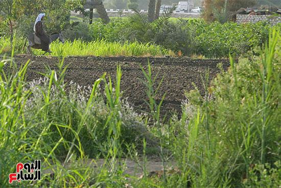 الارض الزراعيه المصريه