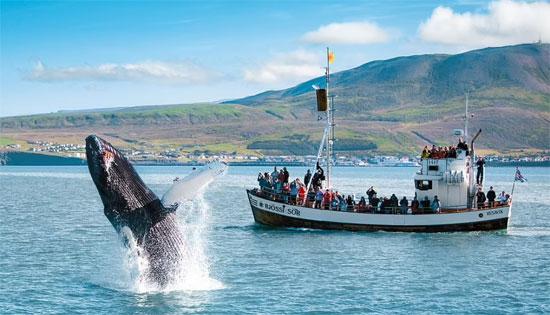 ايسلندا (9)