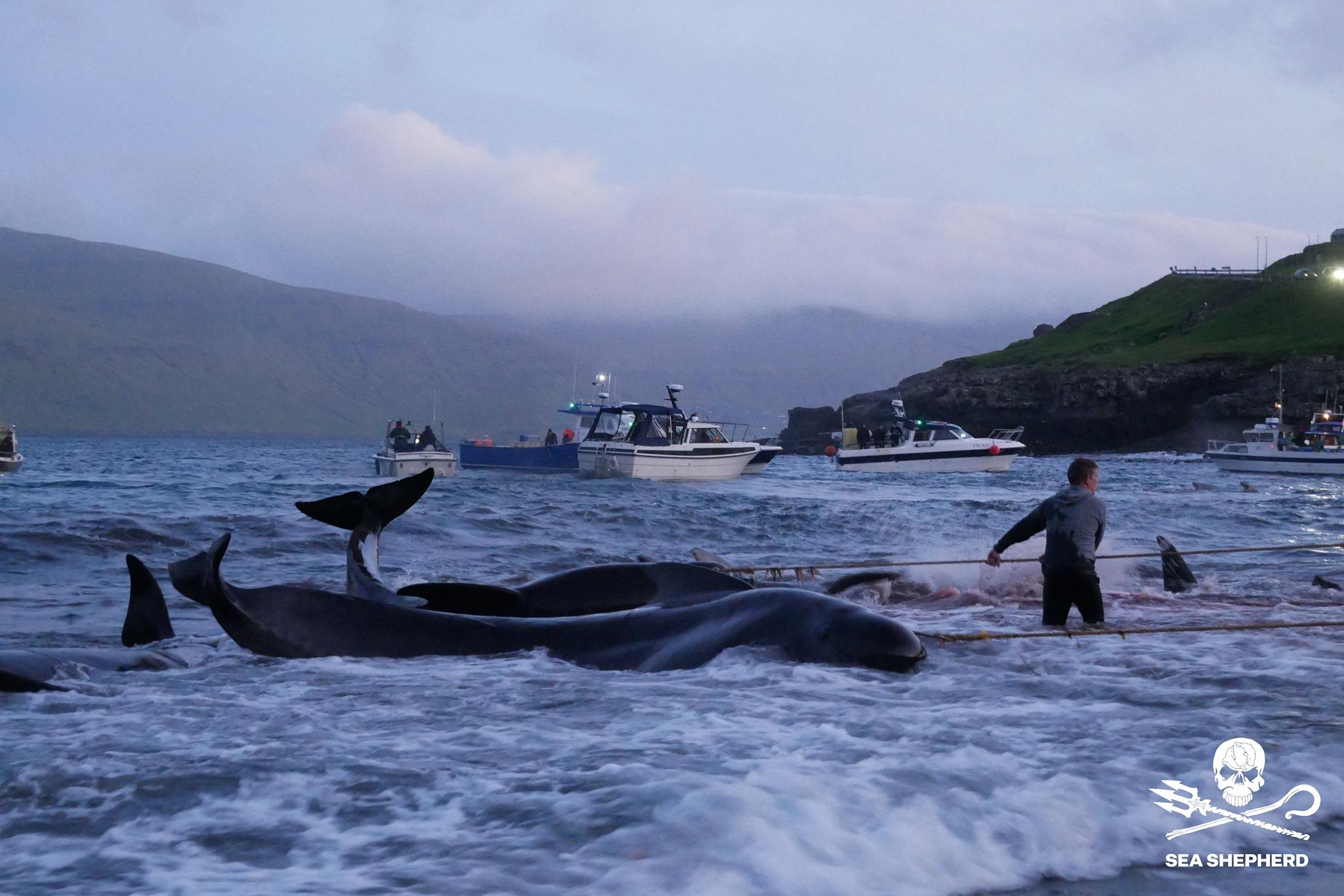 مذبحة الحيتان  (3)