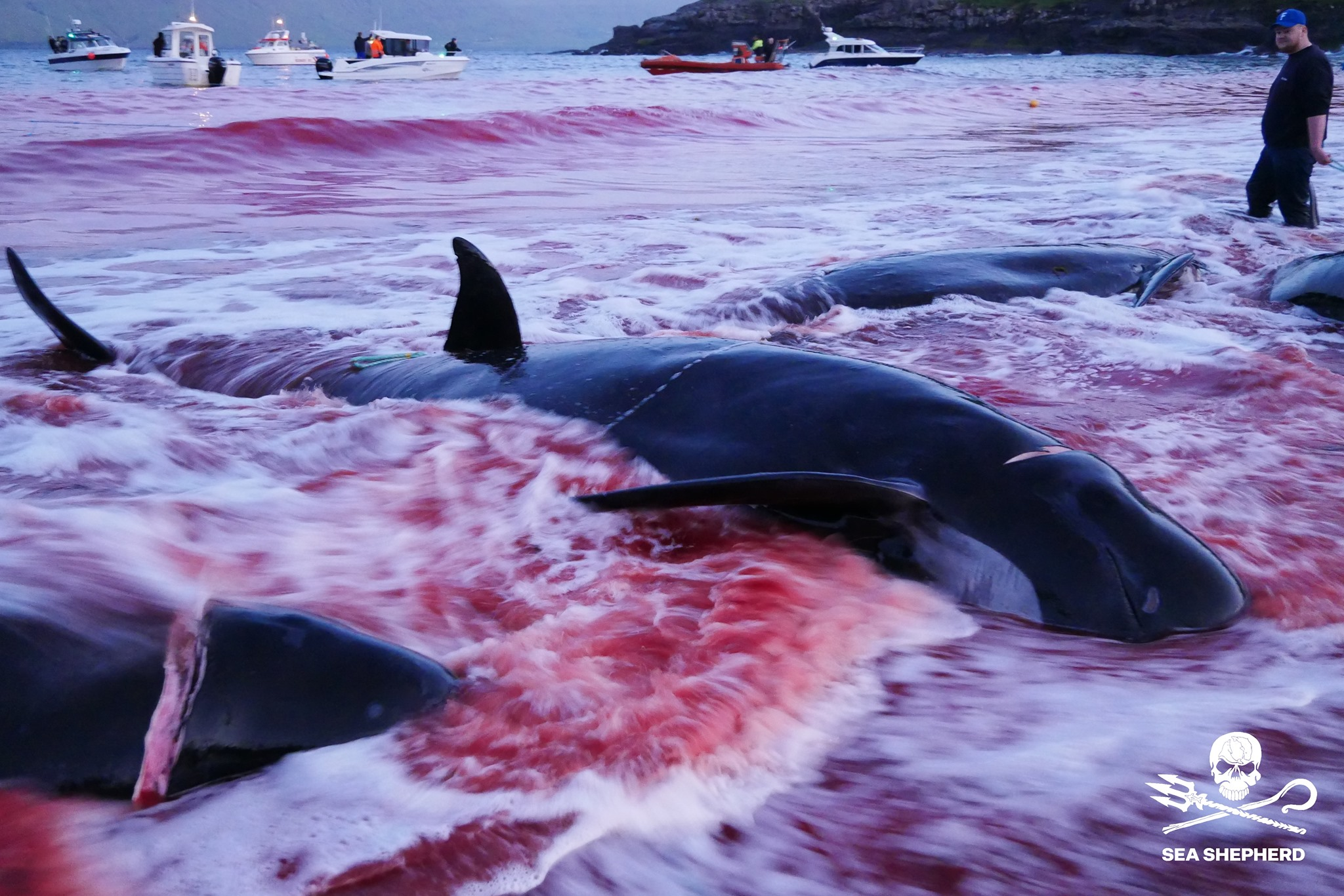 مذبحة الحيتان  (9)