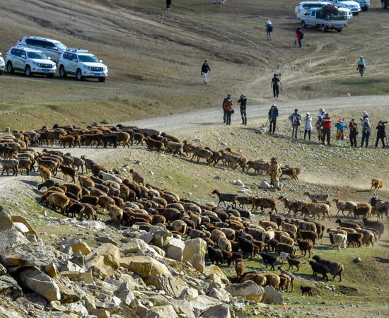 هجرة الحيوان فى الصين (3)