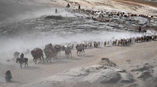 هجرة الحيوان فى الصين (7)