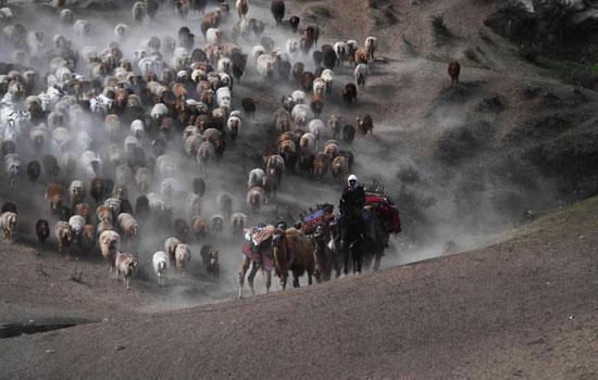 هجرة الحيوان فى الصين (9)