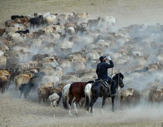 هجرة الحيوان فى الصين (11)