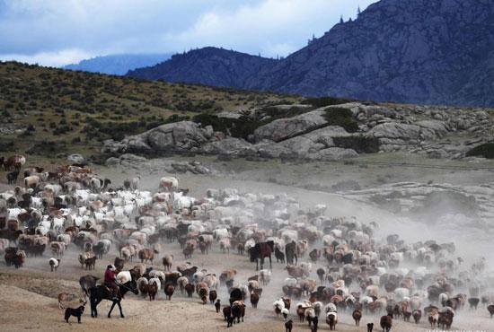 هجرة الحيوان فى الصين (10)