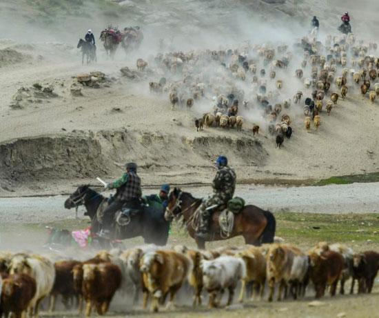 هجرة الحيوان فى الصين (1)