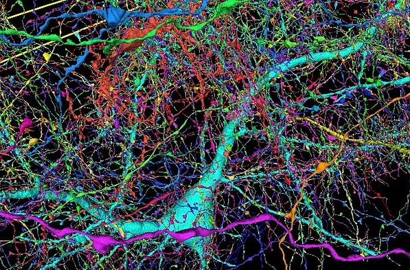 صورة الخلايا البشرية