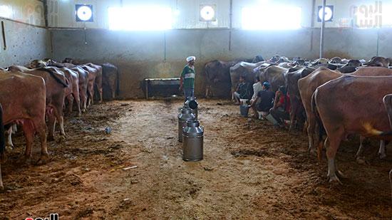 مزارع الجاموس (2)