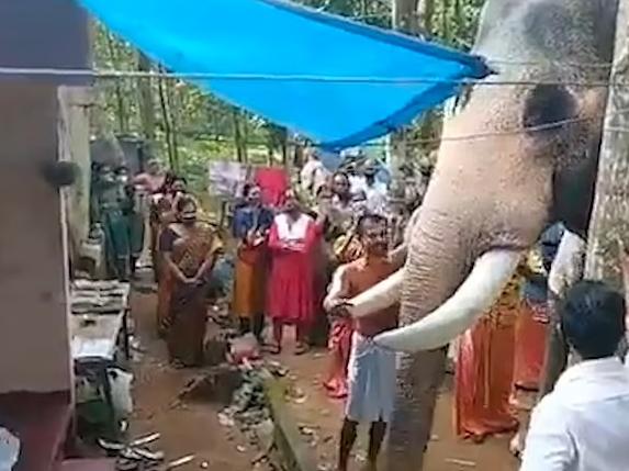 الفيل يودع مدربه