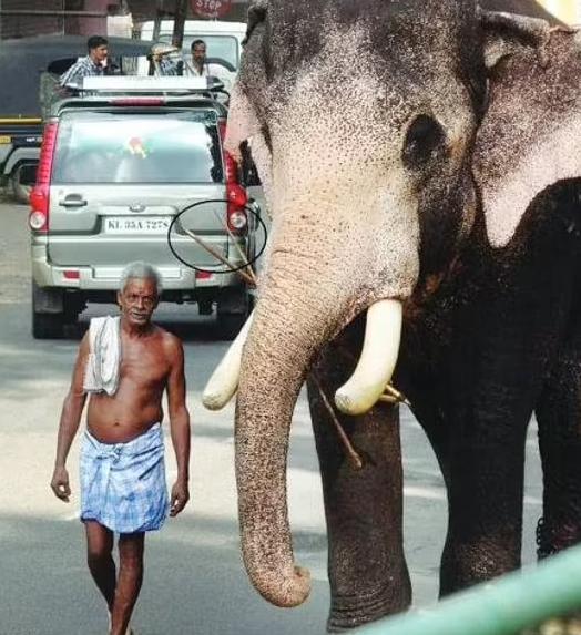 الفيل الوفى