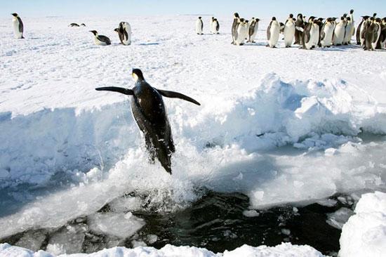 القارة-القطبية-المتجمدة